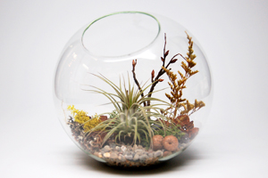Airplant_200x300